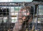 Projekty regulacji o ochronie praw zwierząt chwalą m.in. organizacje ekologiczne i broniące praw zwierząt.